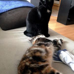 Bellaluna 4 Monate alt