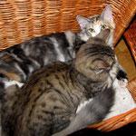 Peppone 4 Monate alt mit Olympia 5 Monate alt