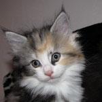 Olympia 6 Wochen alt