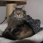 Cosmo 6 Jahre und 7 Monate  alt