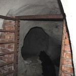 Fledemauszählung in Keller bei Retz