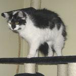 Calypso 9 Monate alt