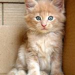 Pierroth 6 Wochen alt