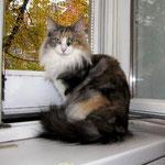 Olympia  2,5 Jahre alt