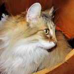Amelie 11 Jahre und 9 Monate alt