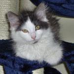 Cheyenne 4 Monate alt