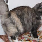 Frøya 6 Jahre und 9 Monate alt