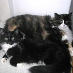 Sir Galahad 6 Monate alt mit Lyra 2 Jahre und 6 Monate alt