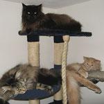 Pierroth 15 Monate alt mit Cosmo 4,5 Jahre alt und Easy 4Jahre und 1 Monat alt