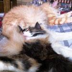 Whoopi 4 Monate alt mit Tristan 16 Monate alt