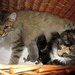 Amelie  5 Jahre und 8 Monate alt mit ihren J-Babies 1 Tag alt und Froya