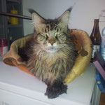 Galileo 6 Jahre alt