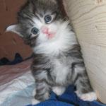 Figaro 4 Wochen alt