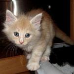 Katana 6 Wochen alt
