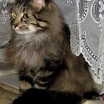 Cosmo 5 Jahre und 100 Monate  alt
