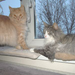Que Sera 11 Monate alt mit Figaro 6 Jahre und 1 Monat alt