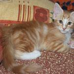 Fafnir 10 Wochen alt