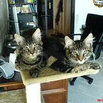 Igor und Ikarus 3,5 Monate alt