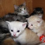 Olympia  3 ,5 Jahre alt mit ihren Babies Yeti, Yogi und Yoko 3 Wochen alt