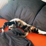 Bellaluna 3 Monate alt