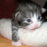 Figaro 2 Wochen alt