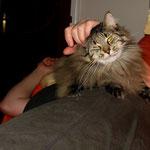 Cosmo 5 Jahre und 2 Monate  alt