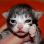 Hieronymus 1 Woche alt