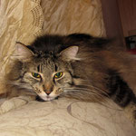 Cosmo 6 Jahre und 4 Monate  alt