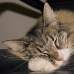 Athina 2,5 Jahre alt