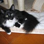 Sir Galahad 6 Monate alt