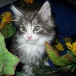 Figaro 8 Wochen alt