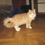 Tristan 1 Jahr und 4 Monate alt
