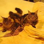 Igor und Ikarus6,5 Monate alt
