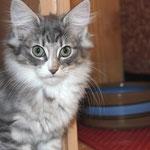 Diana 12 Wochen alt