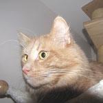 Pierroth 4,5 Jahre  alt