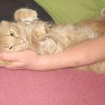 Pierroth 1 Jahr und 10 Monate alt