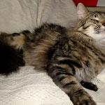 Cosmo 1 Jahr und 10 Monate alt mit Katerhöschen