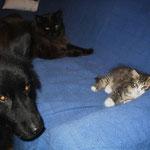 Mit Katzenbaby Camillo und Coonie Easy