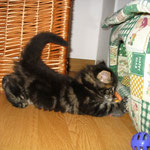 Dorian 6 Wochen alt