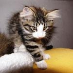 Violetta 10 Wochen alt