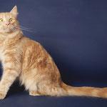 Pierroth 1 Jahr und 5 Monate alt