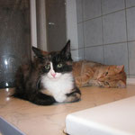 Lyra 4 Monate alt mit Franky