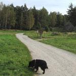 Spaziergang im Waldviertel