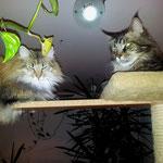 Galileo 5 Jahre und 3 Monate alt mit Penelope (Norw.Waldk.) 26 Monate alt