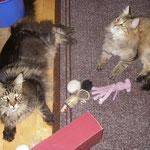 Penelope 14 Monate altmit Coonie Galileo 4Jahre und 3 Monate alt