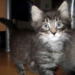 Humphrey 6 Wochen alt