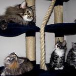Cosmo 3 Jahre und 10 Monate  alt mit Fabricia, Figaro und FLint 69 Tage alt