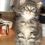 Delilah 6 Wochen alt