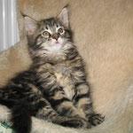 Delilah 10 Wochen alt