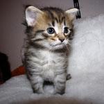 Penelope 4 Wochen alt